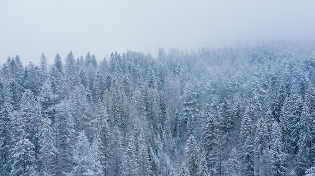 Концепция сцены зимнего туманного соснового леса