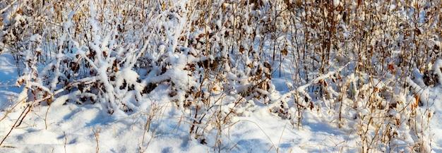 晴天時の降雪後の冬の森。冬の森の雪に覆われた木々や茂み