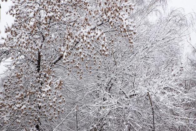 Зимний лес после снегопада.