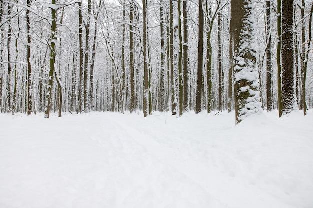 겨울 숲과 도로 풍경