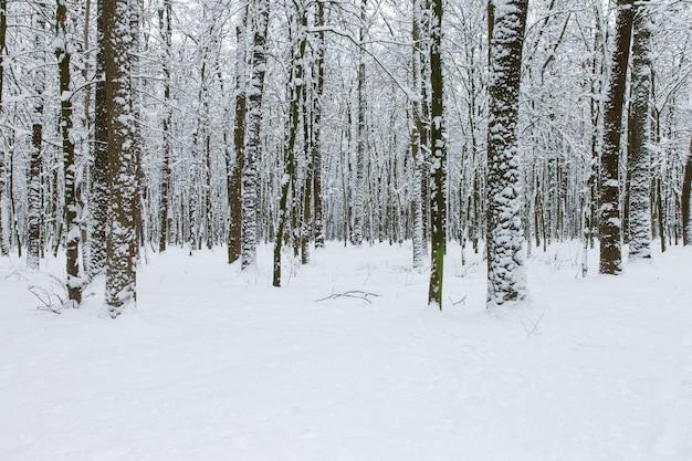 冬の森と道。冬の風景