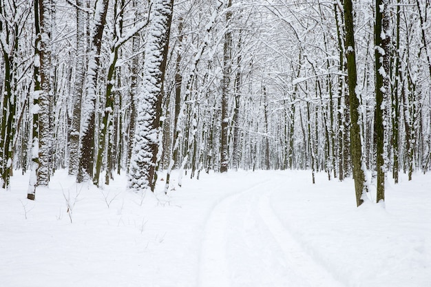 冬の森と道