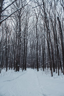 Winter forest in a cloudy day snow