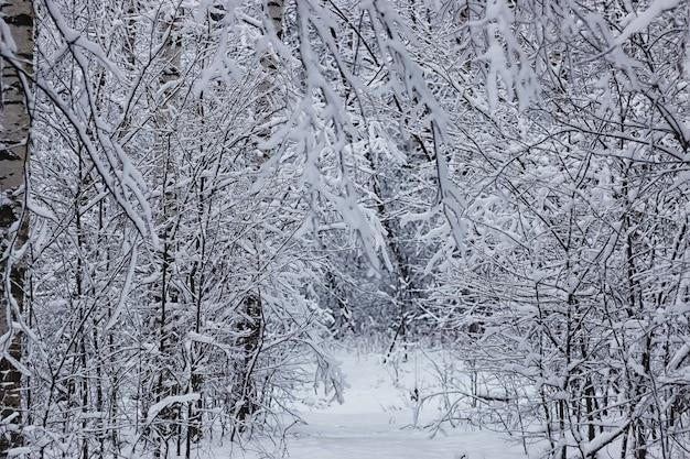 겨울 숲 덮인 눈