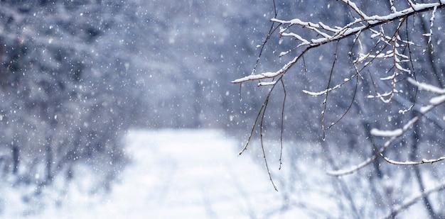 降雪時の冬の森。冬の森で雪が降っています。雪に覆われた木の枝