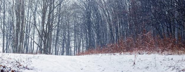 강설량 동안 겨울 숲입니다. 겨울 숲에서 나무, 파노라마