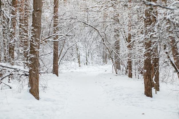 Зимний лес. морозный пейзаж со снежными деревьями