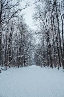 흐린 날 눈에 겨울 숲