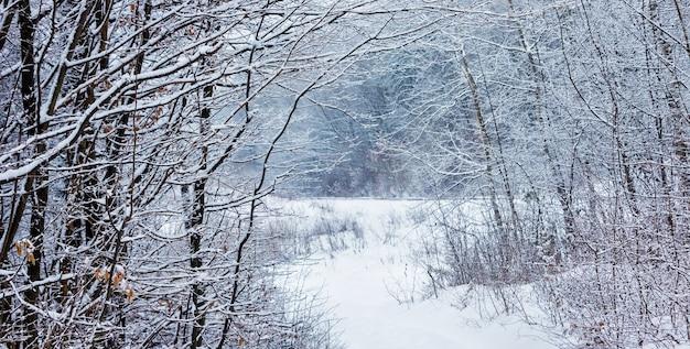 눈 덮인 숲 한가운데 깊은 수면 도로에서 겨울 숲
