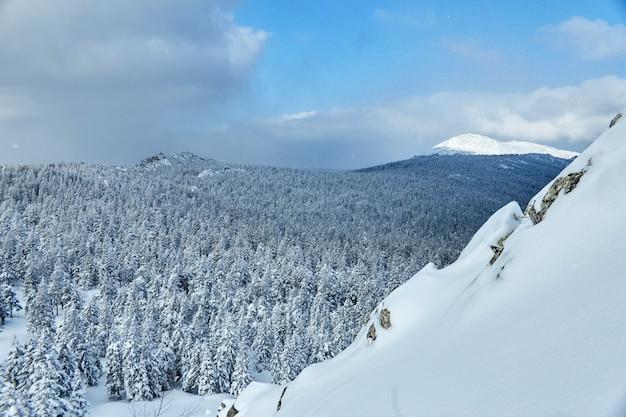 山の中の冬の森、すべて雪に覆われ、凍るような朝。冷凍松とトウヒ。ノイズ、粒子、焦点が合っていない