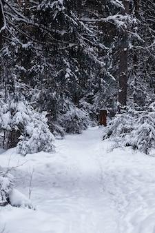 Зимний лесной пейзаж. высокие деревья под снежным покровом. январский морозный день в парке.