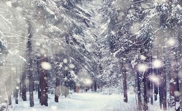 겨울 숲 풍경입니다. 눈 덮인 키 큰 나무. 공원에서 1 월 서리가 내린 날.