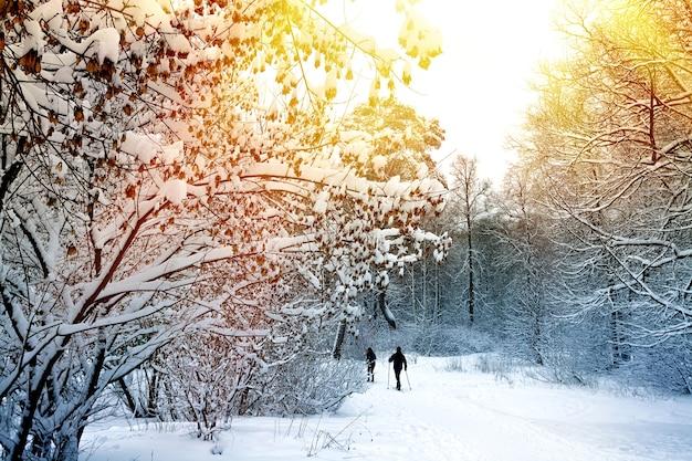 スキーの人々と冬の森の風景