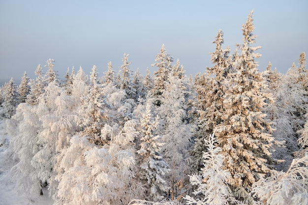 Winter in the forest and mountains. all the trees are covered with snow. spruce in the snow