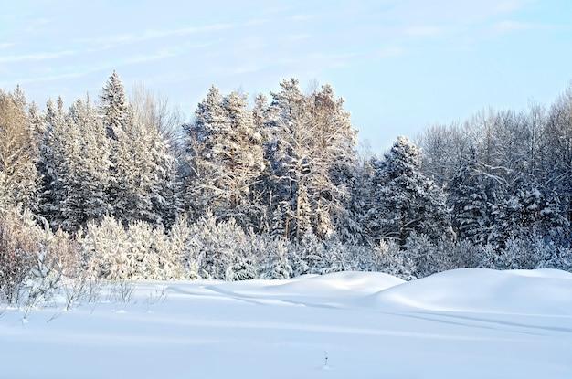 トウヒ、白樺、松の木の冬の森、雪に覆われた枝、白い雪と青い空を背景にした狭い道