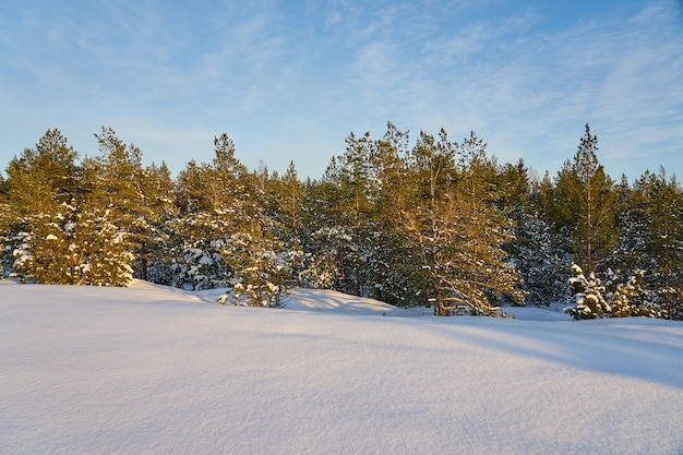 푸른 하늘과 서리가 내린 화창한 날에 겨울 숲