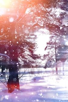 화창한 날에 겨울 숲입니다. 눈 덮인 아침에 숲의 풍경입니다. 새 해 겨울 숲입니다.