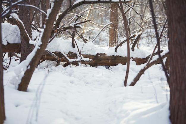 Зимний лес сцены. морозный пейзаж, снежные деревья