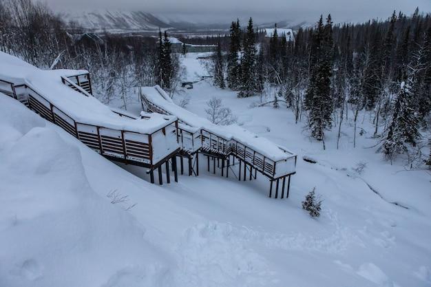 겨울 숲은 눈에 가려져 있습니다. 밤 풍경