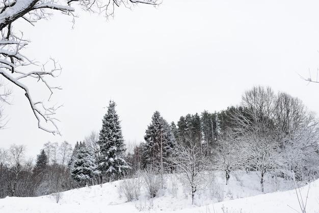 冬の森。雪に覆われた木々。曇った天気。