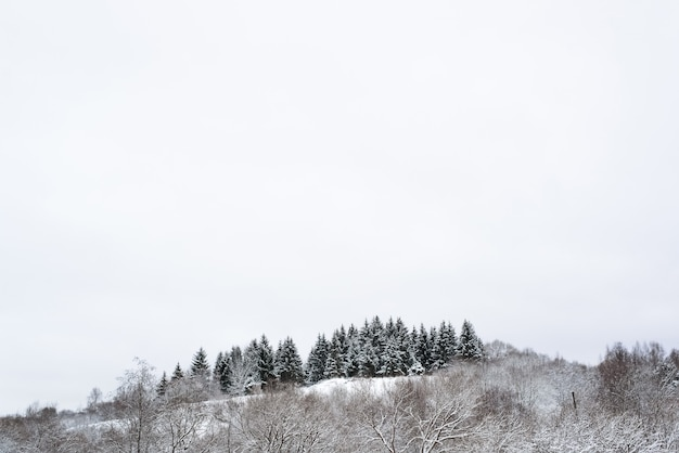 Winter forest. trees covered with snow. pines on the hill