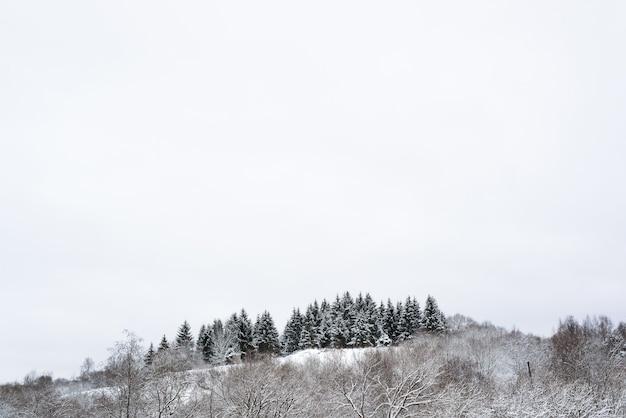 冬の森。雪に覆われた木々。丘の上の松