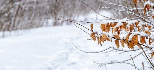 Зимний лес со снежной дорогой и веткой с сухими листьями на переднем плане во время снегопада