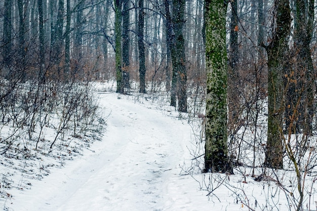 Зимний лес со снежной дорогой между деревьями