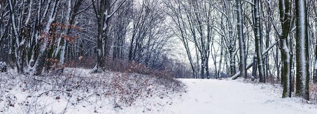 雪に覆われた木々と木々の間の道のある冬の森。森の中の雪に覆われた木々と冬の風景