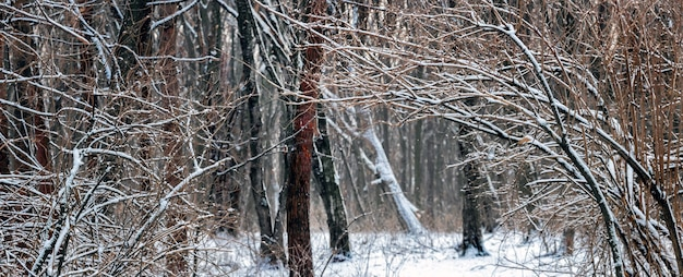 Зимний лес с заснеженными деревьями, дорога в зимнем лесу