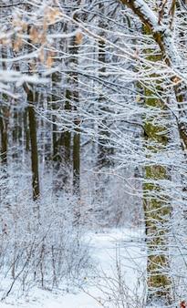 Зимний лес с заснеженными деревьями, зимний пейзаж