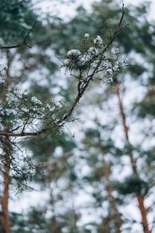木々や床に雪が降る冬の森