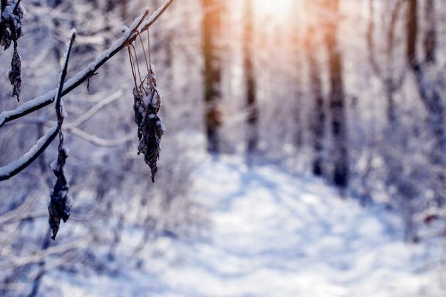 Зимний лес с заснеженными деревьями и дорогой на закате