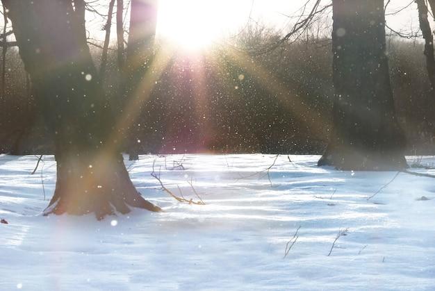 木々の間から輝く白い雪と太陽の冬の森