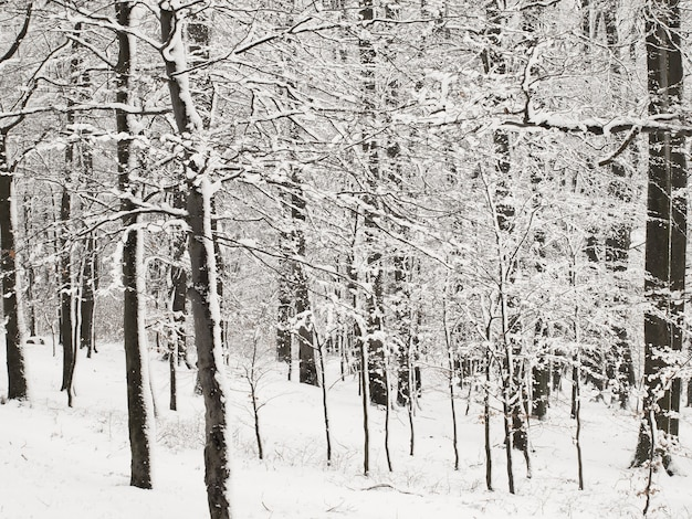 Winter in forest