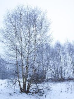 Inverno nella foresta