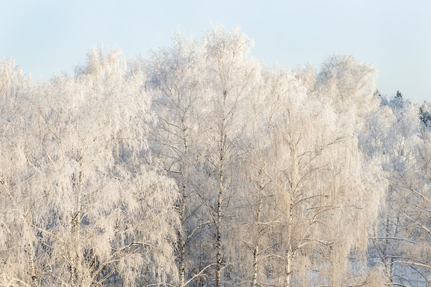 Winter frost on tree branches full frame pure winter background
