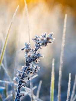 冬の冷ややかな抽象的な自然の背景