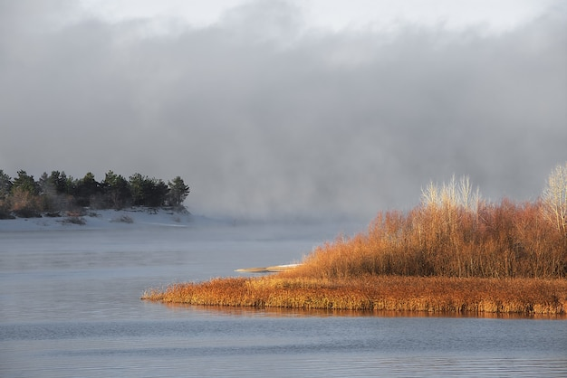 凍っていない川の冬の凍るような霧。銀行の緑のクリスマスツリーと草。