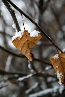 Зимние замороженные лестницы желтый лист зимой