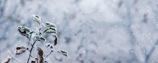 降雪時のウィンターガーデン。降雪時に乾燥した葉を持つ霜で覆われたリンゴの木の枝