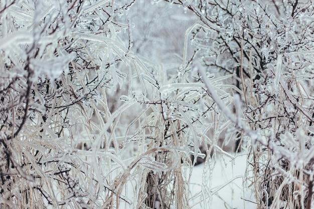 Зимняя трава покрыта льдом