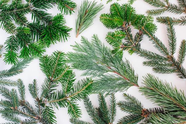 전나무 분기와 소나무 겨울 방학 및 크리스마스 배경. 휴일 개념입니다. 평평한 평지, 평면도