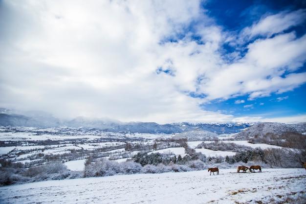 ラセルダーニャ、ピレネー、スペインの冬の馬