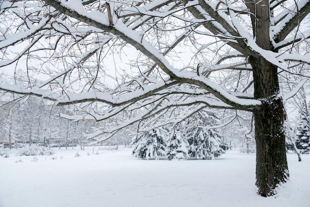 Зима в городском парке, заснеженные деревья