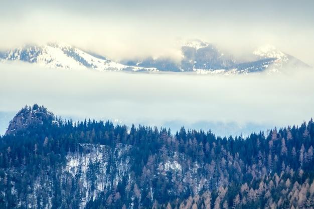 山の冬。樹木が茂った雪の斜面の曇りの天気。霧と雲