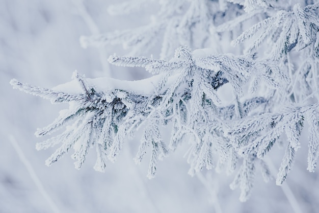 Зима на природе