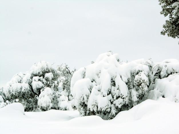 冬の風景や雪の多い木々