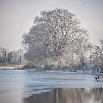 Winter landscape by the lake. trees covered with frost in the midlands of ireland