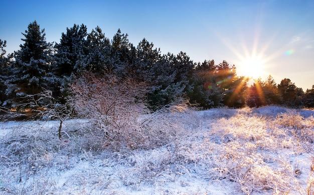 冬の風景。自然の構成。